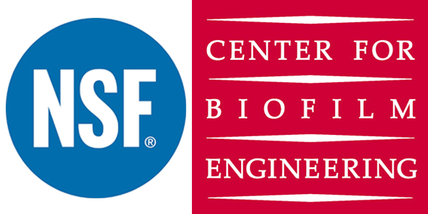 nsf-and-center-for-biofilm